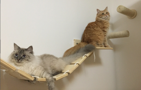 kedi-mobilyaları-aksesuarları