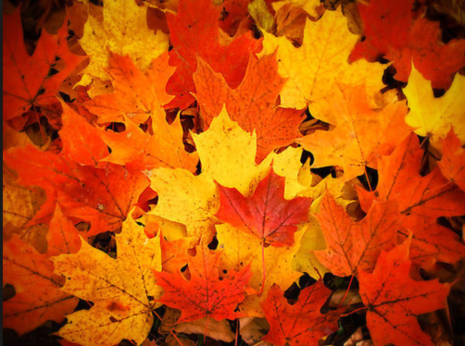 sonbaharda değişim dönüşüm zamanı