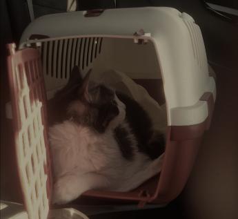 kediyle-yolculuk-taşıma-kabı