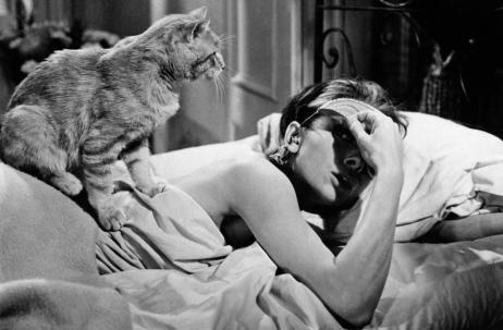 Cat-chat-kedi